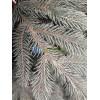 Ель Альпийская голубая (с иголками РЕ) - 1,8 м